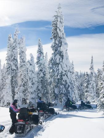 Snowmobilers in a Hoar Frosted Forest on Two Top Mountain, West Yellowstone, Montana, United States