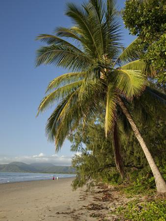 Four Mile Beach with Coconut Palm Trees, Port Douglas, Queensland, Australia, Pacific