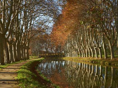 Yellow and Red Leaves in Autumn Along the Canal Du Midi, UNESCO World Heritage Site, Aude, Languedo