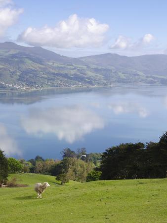 Otago Harbour, Otago Peninsula, Otago, South Island, New Zealand, Pacific
