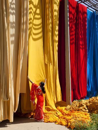 Woman in Sari Checking the Quality of Freshly Dyed Fabric Hanging to Dry, Sari Garment Factory, Raj