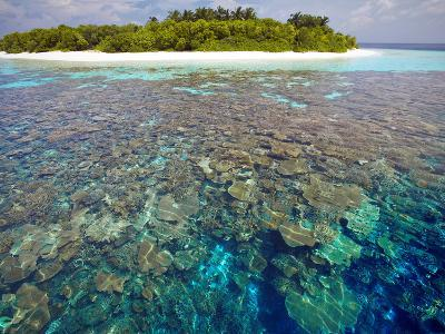 Coral Plates, Lagoon and Tropical Island, Maldives, Indian Ocean, Asia