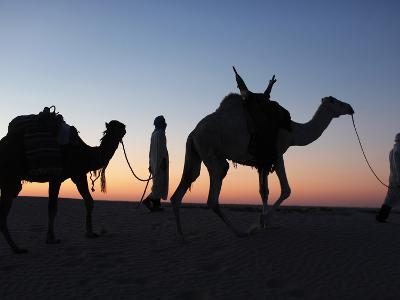 Camel Drivers at Dusk in the Sahara Desert, Near Douz, Kebili, Tunisia, North Africa, Africa