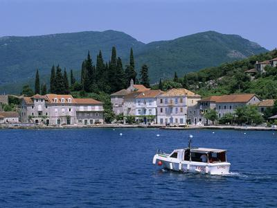Rose, the Boka Kotorska (Bay of Kotor), Montenegro, Europe