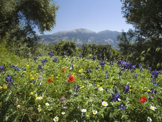 Spring Flowers White Mountains Lefka Ori Chania Region Crete