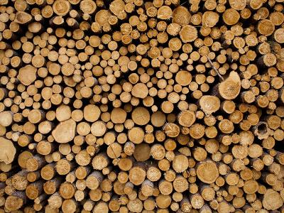 Stacked Piles of Cut Logs at Zellar Forest Products, Gulliver, Michigan, Usa