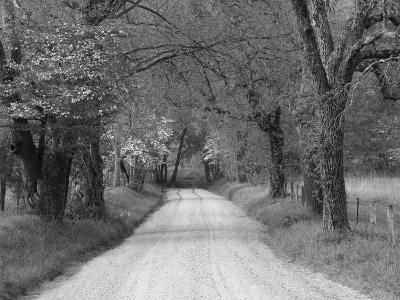 Lane at Cades Cove in the Spring in the Smoky Mountains National Park, Tennessee, Usa
