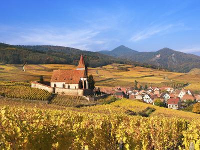 The Vineyards at Hunawihr, Alsace, France