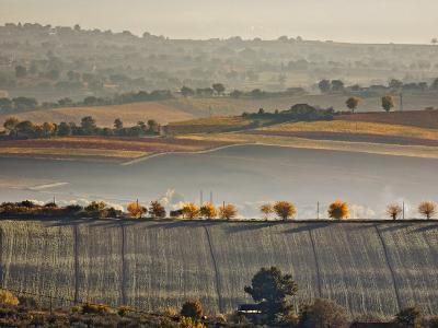 Italy, Umbria, Perugia District, Autumnal Countryside Near Montefalco