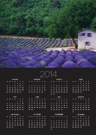 Fields of Lavender by Rustic Farmhouse