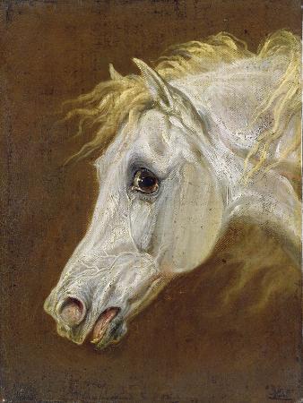 Head of a Grey Arabian Horse