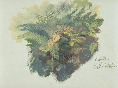 A Study of Ferns, Citivella, 1842, (Oil on Gray Wove Paper)