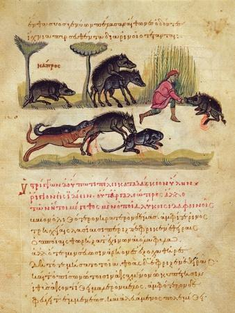 Treatise on the Boar: Life, Mating, Hunting, Illustration from the 'Cynegetica' by Oppian