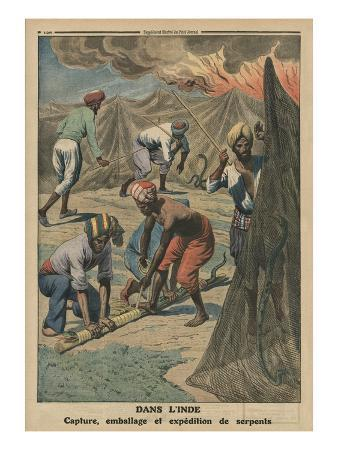 Catching, Packing and Sending Snakes, India, Back Cover Illustration from 'Le Petit Journal'