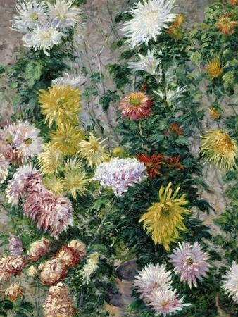 White and Yellow Chrysanthemums, 1893