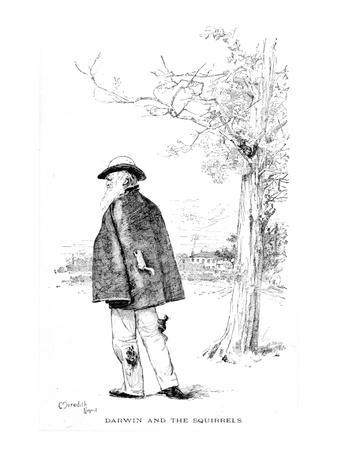 Darwin and the Squirrels, Illustration from 'Charles Darwin, His Life and Work'