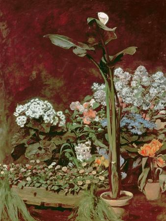 Arum and Hothouse Plants, 1867