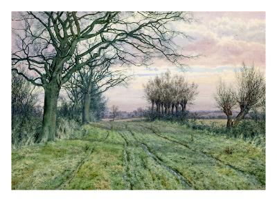 A Fenland Lane with Pollarded Willows, 1887 (W/C on Paper)
