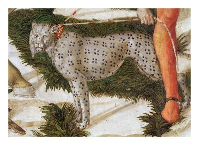 Leopard Straining on a Leash, Detail from the Journey of the Magi Cycle in the Chapel, C.1460