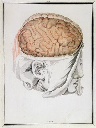 The Brain, from 'Traite D'Anatomie De Cerveau' by Felix Vicq D'Azyr (1748-94) 1786