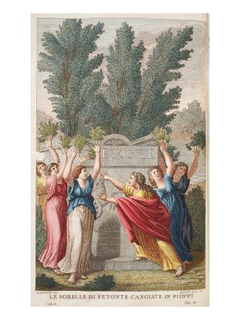 Heliades into Trees That Yield Amber, Illustration from Ovid's Metamorphoses, Florence, 1832