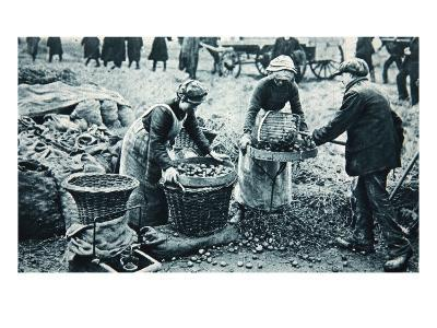 Women War-Workers on the Land, Illustration from 'The Illustrated War News', 7th March 1917