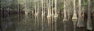 Reflection of Trees in a Lake, Tallahassee, Florida, USA