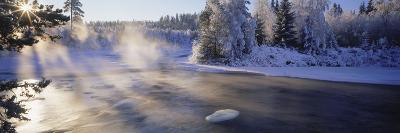 Snow Covered Laden Trees, Dal River, Sweden