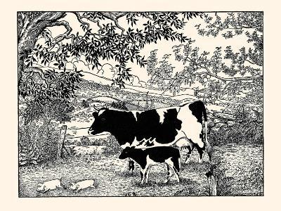 When They Went Scampering By, the Cow Just Stared at Them