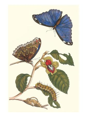 Epiphytic Climbing Plant with a Peleides Blue Morpho Butterfly and a Gulf Fritillary