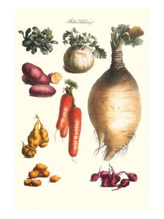 Vegetables; Onion, Potato, Carrot, Roots, Tubers