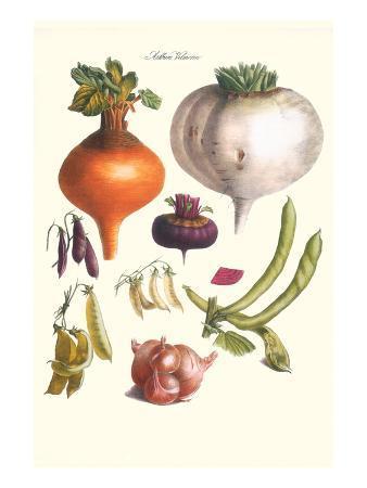Vegetables; Peas, Onion, Turnip, Raddish, Green Beans