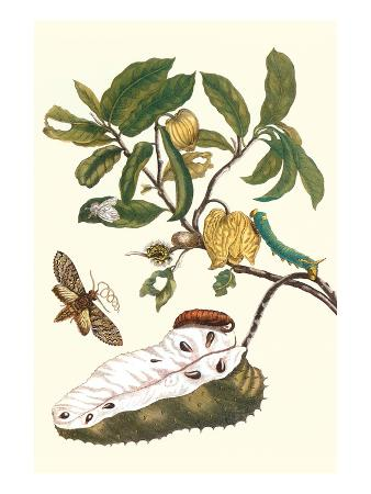 Custard Apple and Flower Moth
