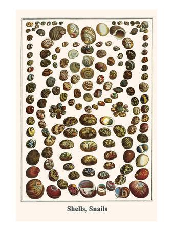 Shells, Snails