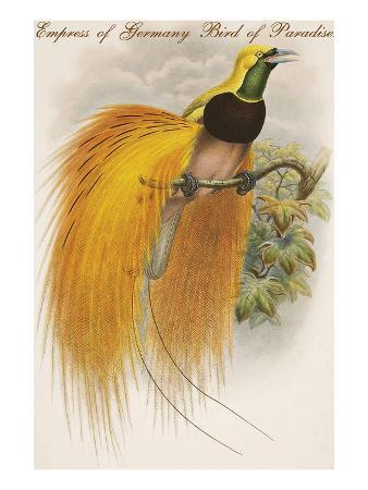 Empress of Germany Bird of Paradise.