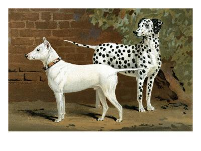 Bull Terrier and Dalmation