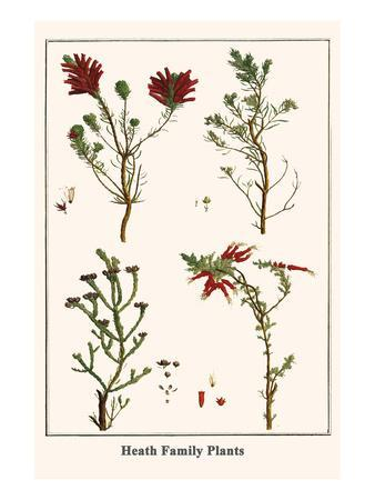 Heath Family Plants