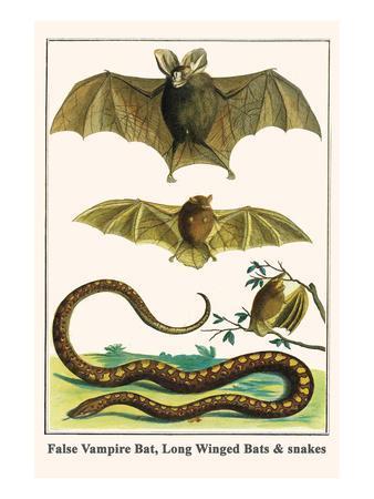 False Vampire Bat, Long Winged Bats and Snakes