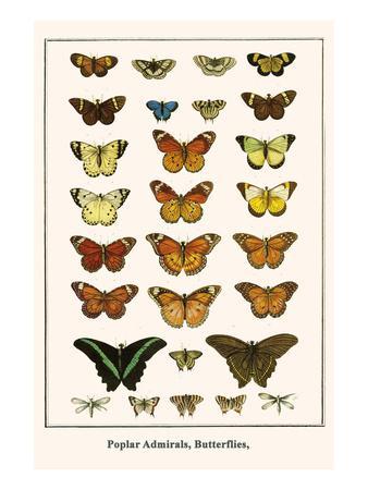 Poplar Admirals, Butterflies,