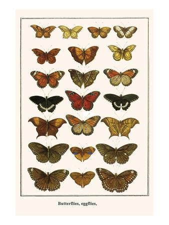 Butterflies, Eggflies,