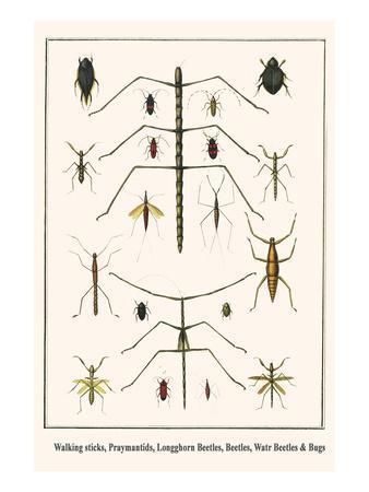 Walking Sticks, Praymantids, Longghorn Beetles, Beetles, Watr Beetles and Bugs