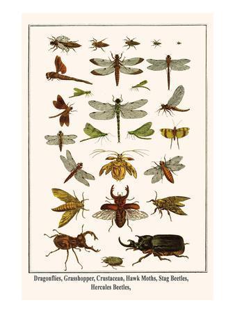 Dragonflies, Grasshopper, Crustacean, Hawk Moths, Stag Beetles, Hercules Beetles,