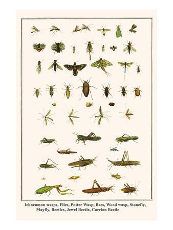 Ichneumon Wasps, Flies, Potter Wasp, Bees, Wood Wasp, Stonefly, Mayfly, Beetles, Jewel Beetle, etc.