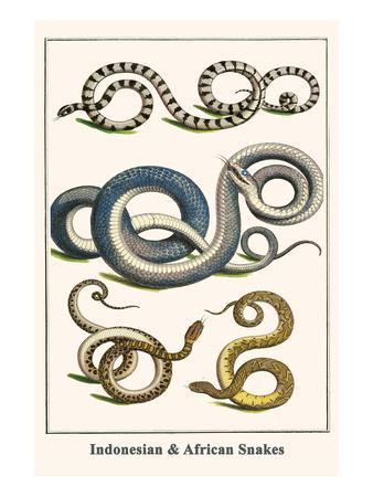 Indonesian and African Snakes
