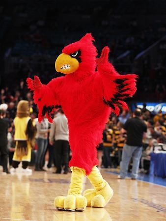 University of Louisville - Cardinal Bird