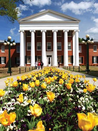 University of Mississippi (Ole Miss) - Yellow Tulips and Lyceum