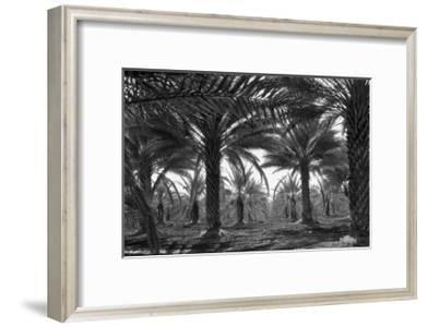 Date Palms Prints Dorothea Lange Allposters Com