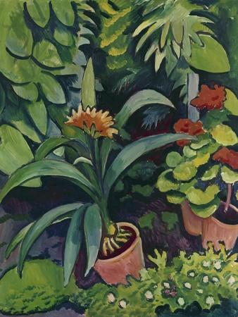 Flower Pots in a Garden: Bush Lilies and Pelargonidin, 1911