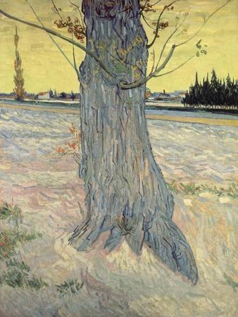 The Tree. Arles, September 1888