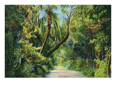 Florida - Overgrown Vegetation Scene